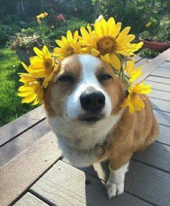 Funny Dog - MC