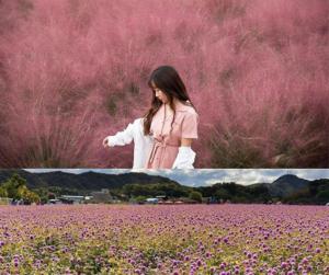 đồng cỏ hồng muhly