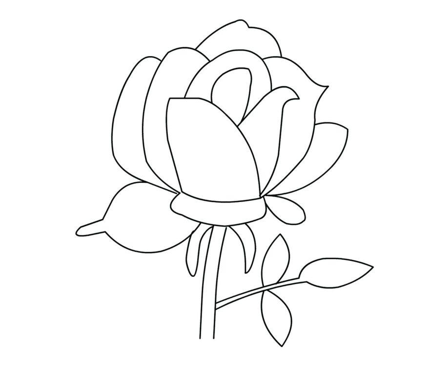 tranh tô màu hoa hồng vector