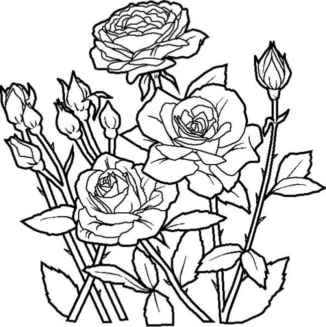 tranh tô màu hoa hồng nhiều chi tiết